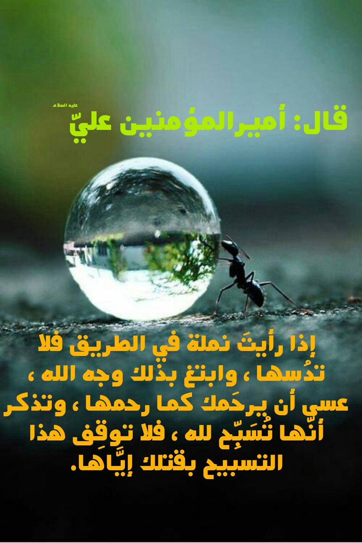 Pin By Latifa Elkheshen On Hadith Ali Quotes Life Wisdom