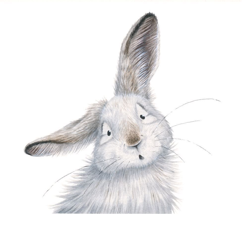 Another one in the series! This time is the snowshoe hare called Albert. 🐇      #rabbit #kidlit #childrensillustrator…