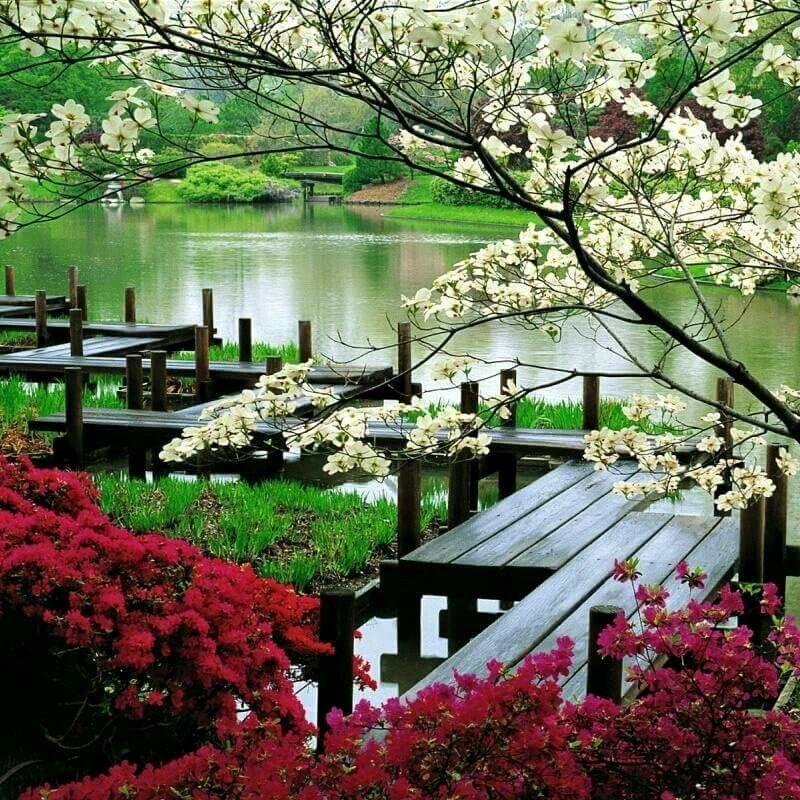 Beautiful garden by a pond St louis botanical garden