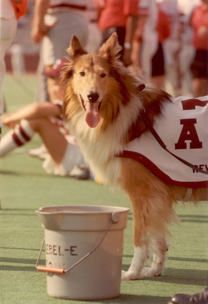 Pin By Madwild Spirit On Live Mascots Reveille Of Texas A M Texas A M Aggies Mascot Texas Tech