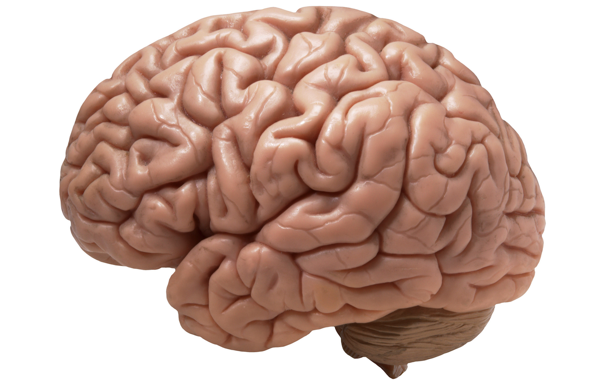 A New Push To Explore The Brain Human Brain Brain Tumor Brain Health