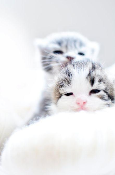 Sleepy Kitties Susse Tiere Babytiere Katzenbabys