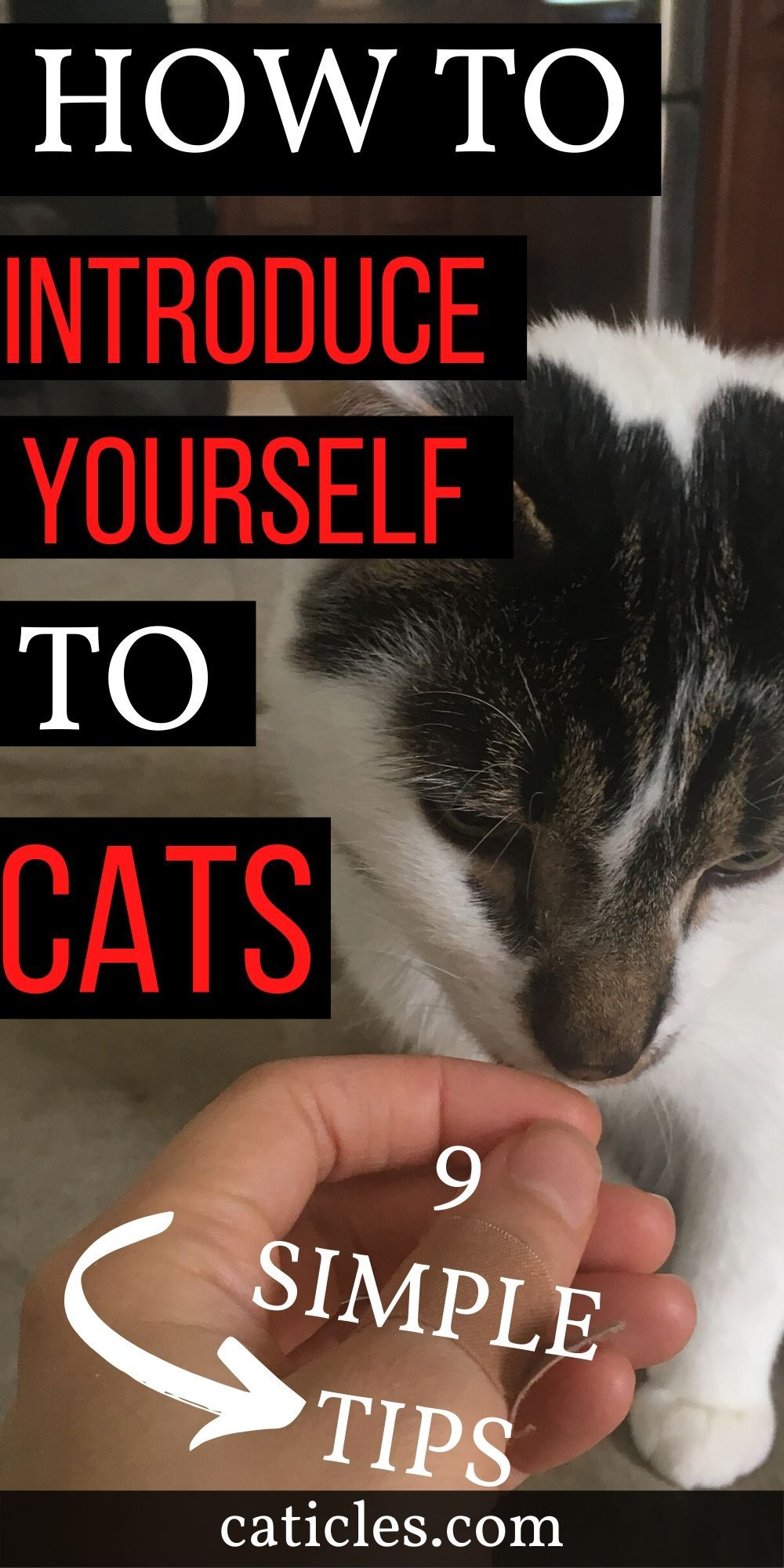 How To Approach A Cat For The First Time In 9 Successful Steps In 2020 How To Introduce Yourself Cat Care Tips Cats