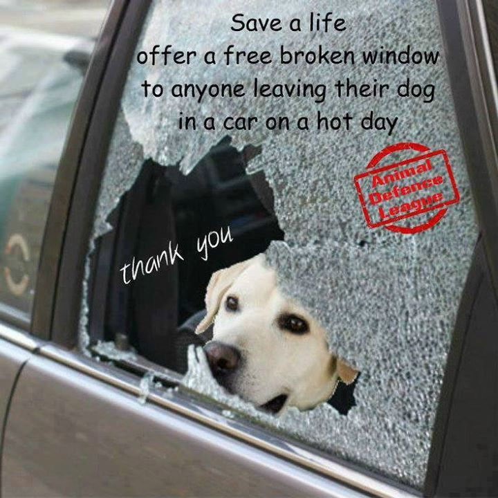 36 best images about Summer Dog Days Hot Car on