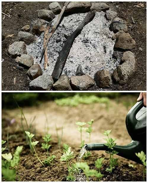 Simple Vegetable Garden Ideas For Your Living: The Benefits Of WOOD ASH In The Garden #Ideas (With Images