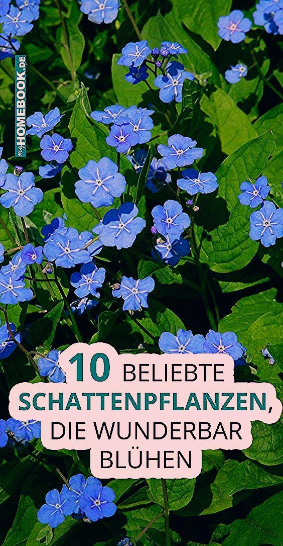 Photo of 10 beliebte Schattenpflanzen, die wunderbar blühen