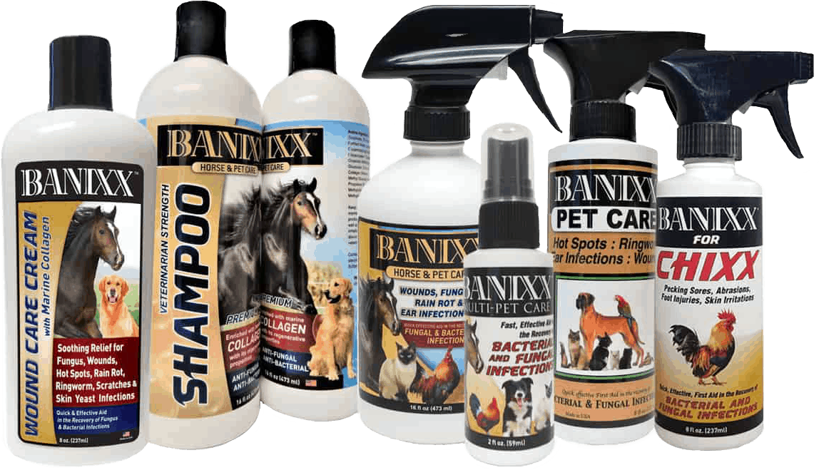 Where To Buy Banixx Find Banixx On Line Banixx Store Locator In 2020 Dogs Ears Infection Cat Ear Infections Dog Yeast Infection Ear