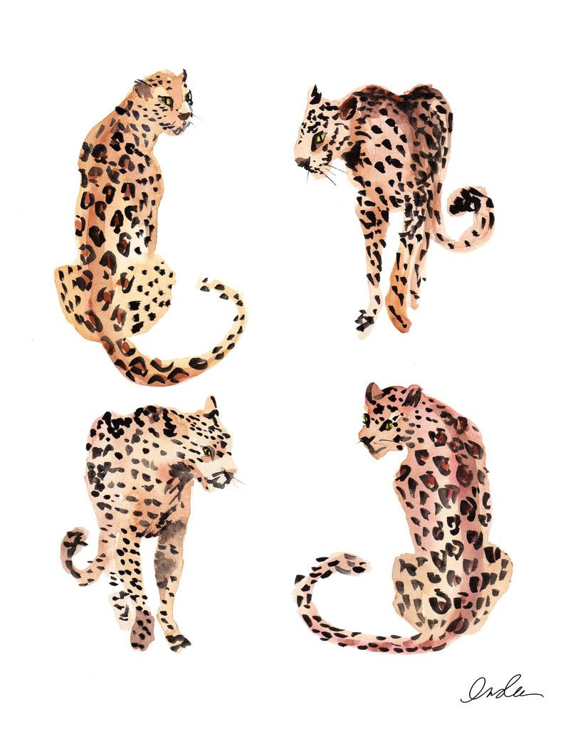 Animated Cheetah Wallpaper rawwrrrrrr   art photography, art, prints