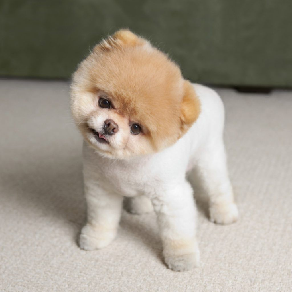 Cute Small Puppies World Of Animal Cute Dogs Puppies Cute