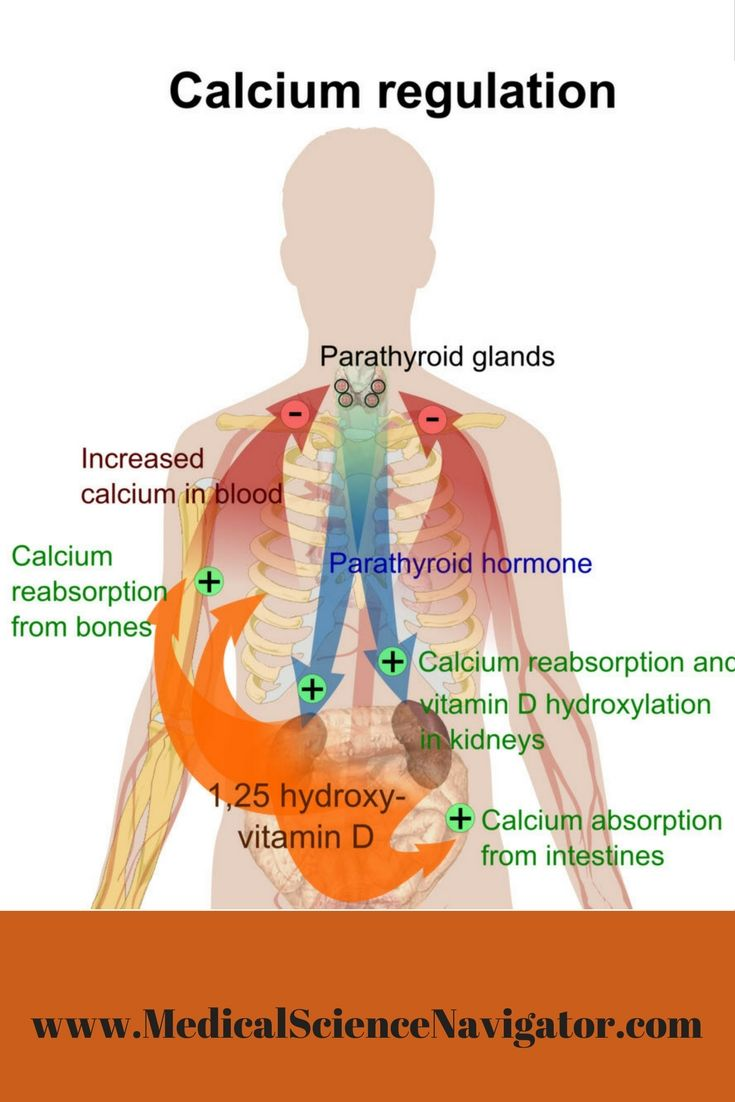 For students new to the endocrine… | Endocrine by Medical Science ...