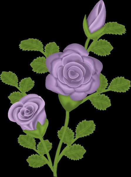 Purple Rose Clip Art الإشرآف ب جدآرة وأستحق آق Purple Rose Transpar Purple Roses Flower Art Roses Drawing