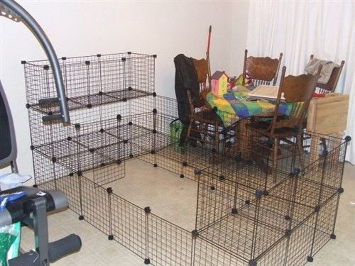 C C Cage For Flemish Giant Binkybunny Com House Rabbit Information Forum Binkybunny Com Binkybunny Forums Habi Flemish Giant Diy Rabbit Cage C C Cage