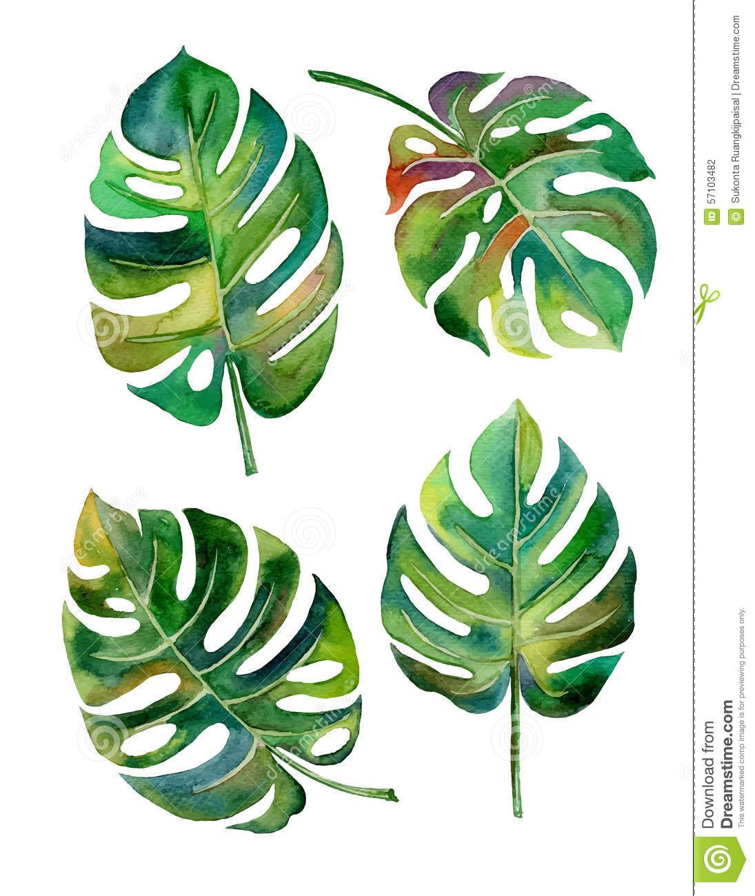 Split Leaf Philodendron Watercolor On White Background