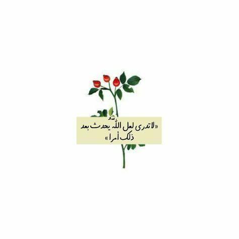 لا تدري لعل الله يحدث بعد ذلك أمرا Islamic Quotes Words Life Quotes