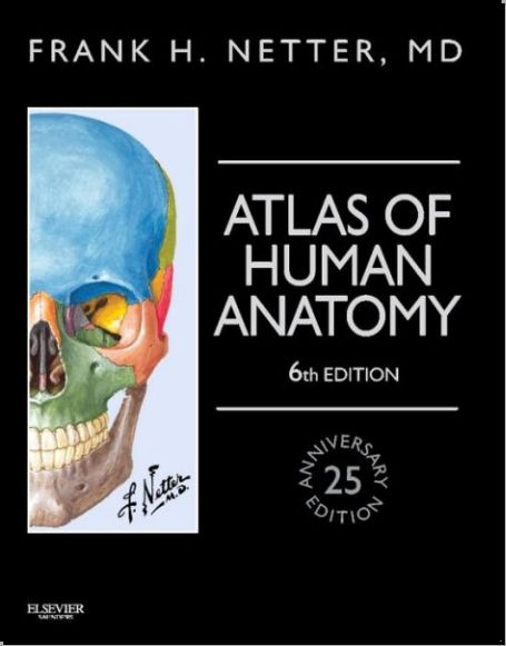 Atlas Of Human Anatomy 6th Edition Pdf Netter Anatomy Anatomy