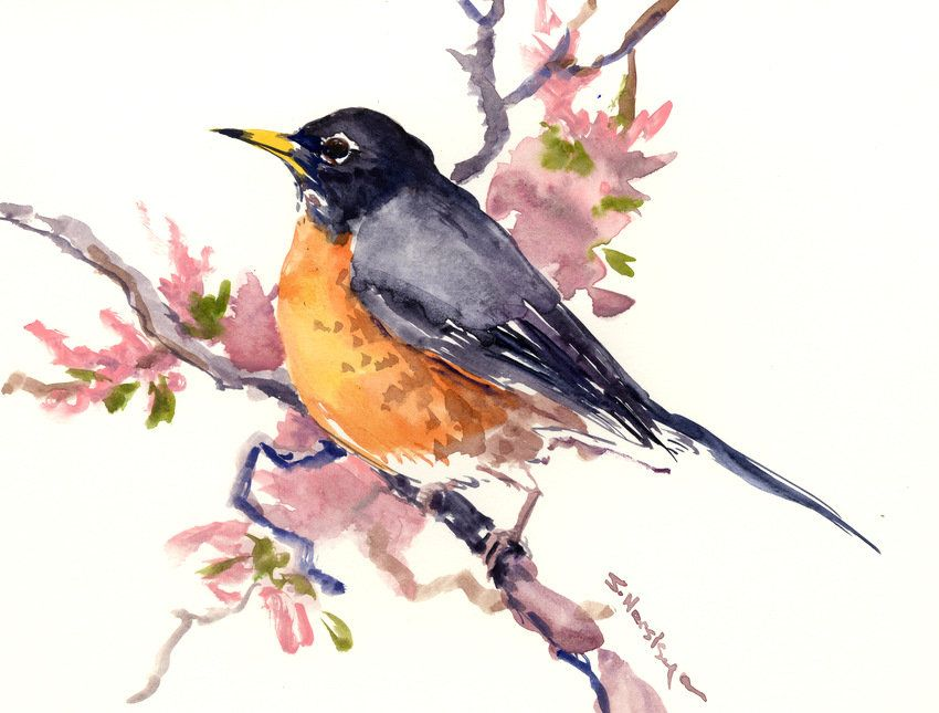 American Robin Original Watercolor Painting Watercolor Bird Art