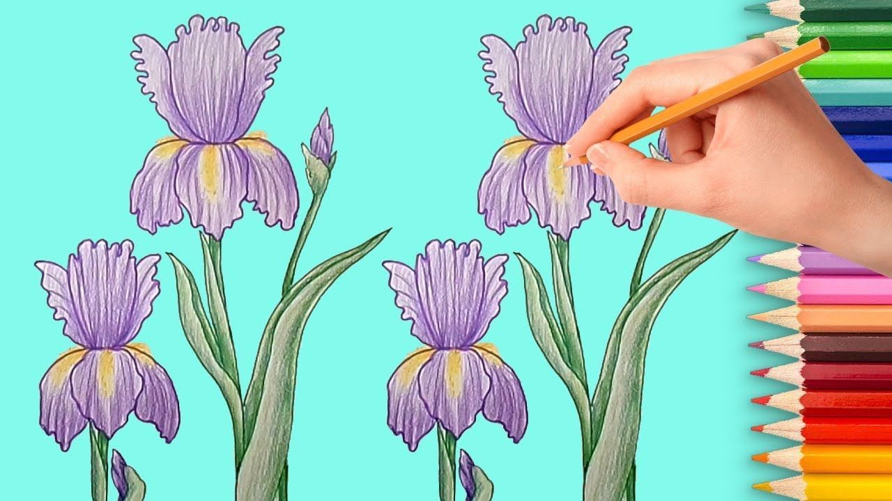 How to Draw an Iris Flower Easy Step by Step Learn to Draw