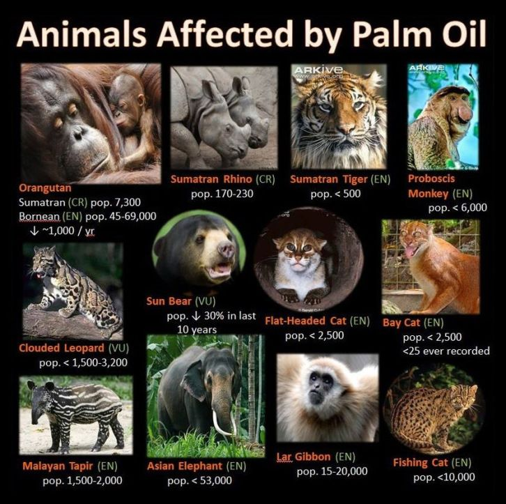 Deforestation and Palm Oil Gallery Palm oil, Endangered
