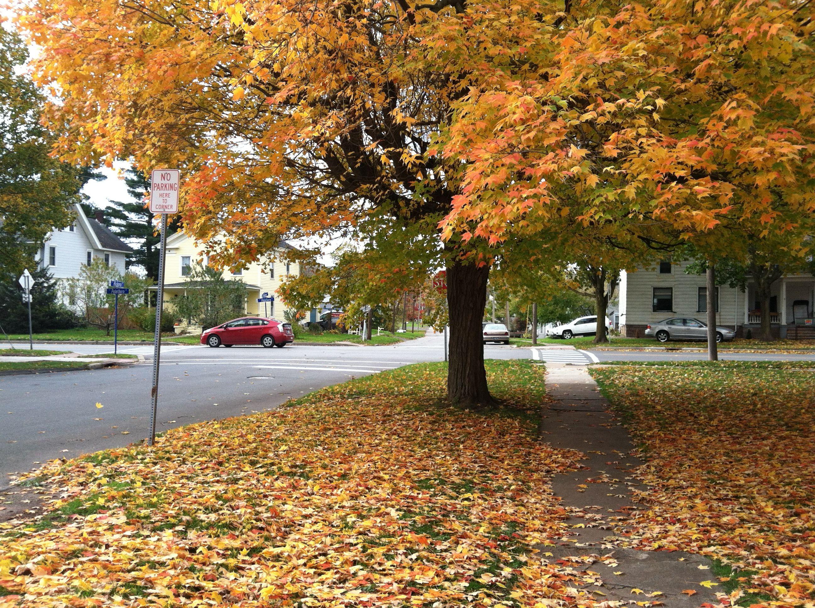 Fall in the hood