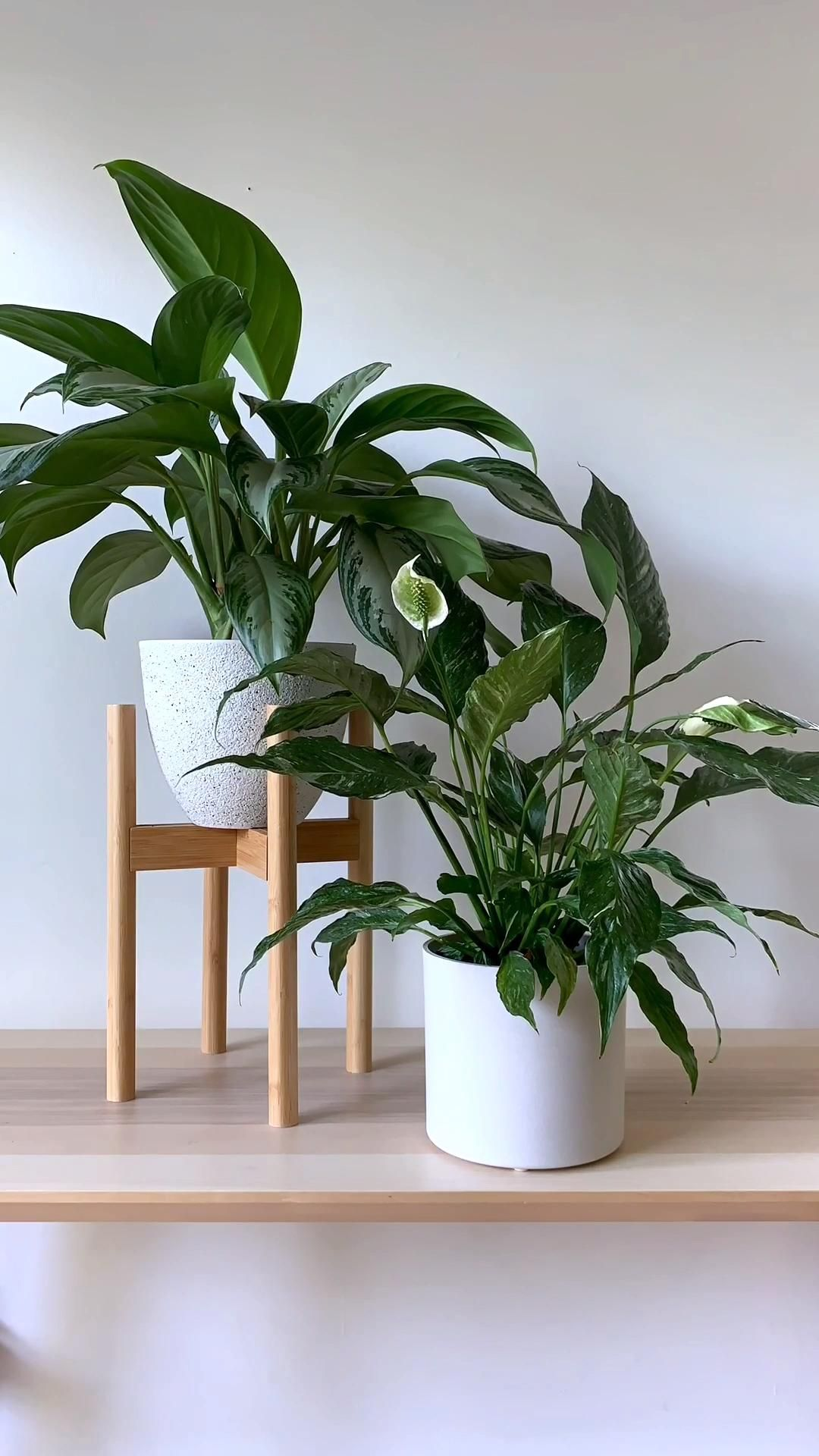 Photo of Indoor Houseplants Time-Lapse | Chinese Everg