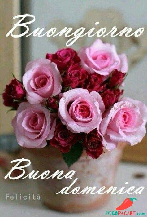 Buona Domenica Buongiorno 339 Foto Particolari Buona