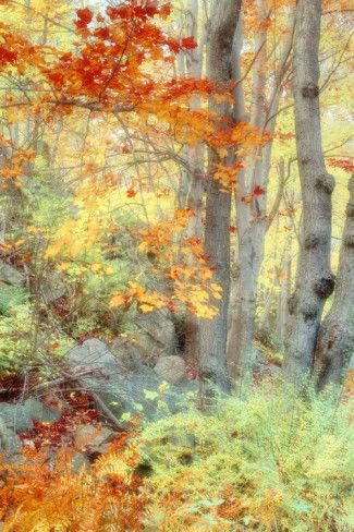 Art print POSTER New England Forest in Autumn
