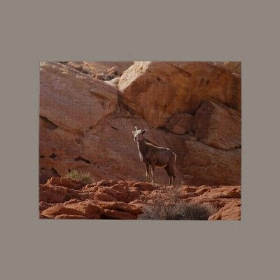 Mountain Goat in Valley of Fire Jigsaw #Puzzle #gifts #photos $16.85