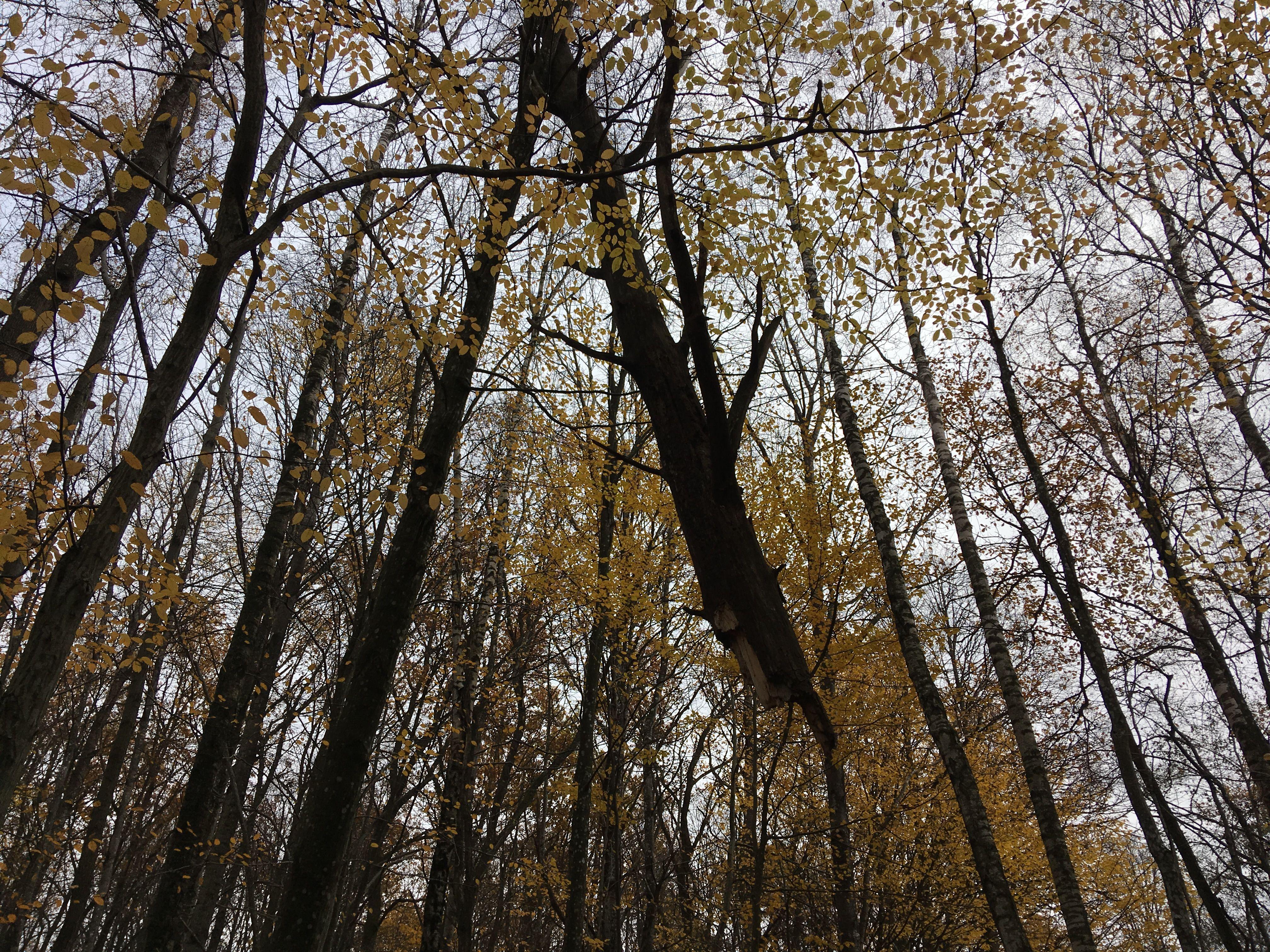 Висящий на деревьях кусок будущего валежника