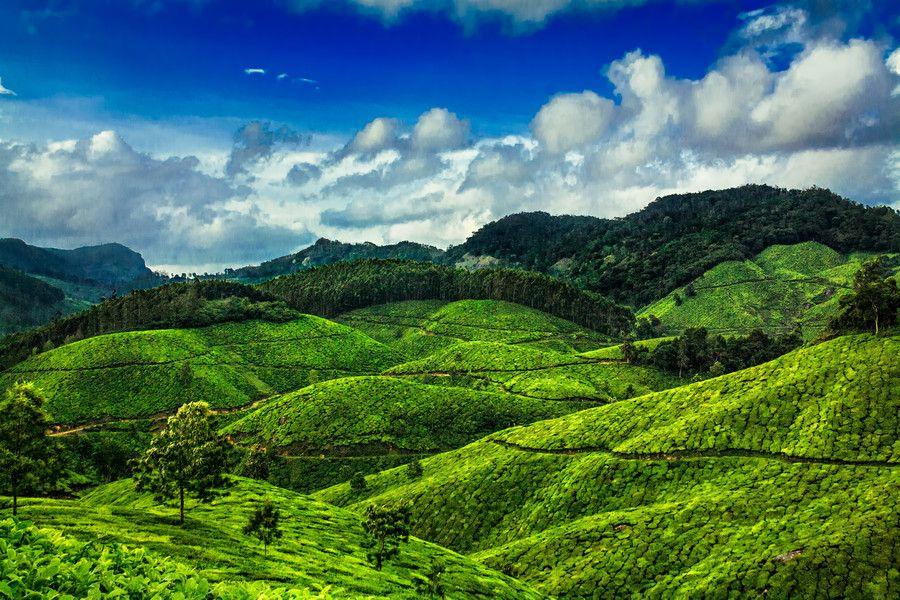 Munnar Kerala For Hd Wallpapers And Prints Munnar Nature Photographs Nature Photography