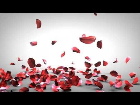 Falling Rose Petals Youtube Rose Petals Falling Rose Petals Petals
