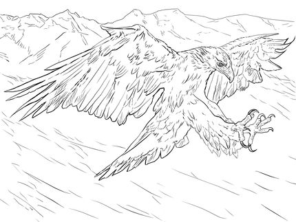 Click To See Printable Version Of Golden Eagle Attacks Coloring Page