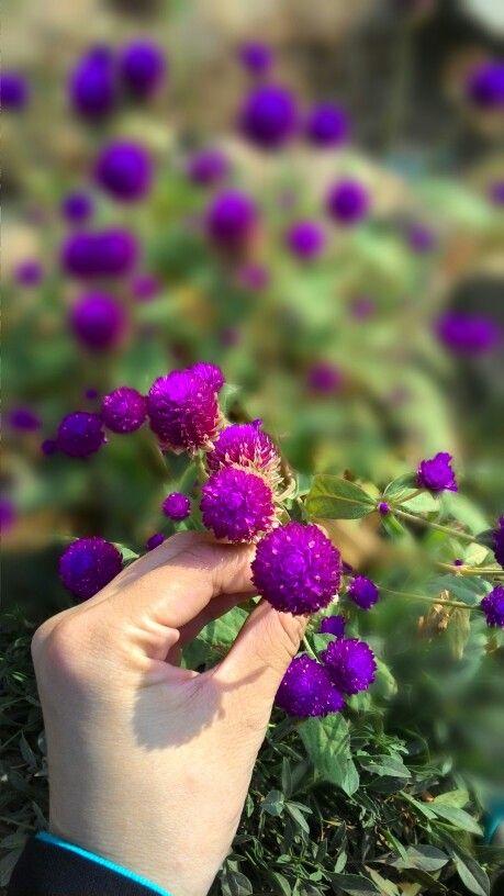 Bunga pentol bakso flowers pinterest flowers bunga pentol bakso thecheapjerseys Image collections