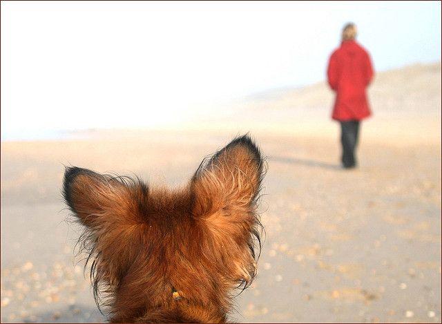 """""""Dazu kommt, dass Kopfarbeit auf Spaziergängen wesentlich besser auslastet, als reines laufen. 30 Minuten konzentriertes Arbeiten macht die meisten Hunde müder, als 2 Stunden reiner Spaziergang. Und nicht zuletzt fördert die gemeinsame Beschäftigung auch die Kommunikation und die Bindung zwischen Hund und Halter."""""""