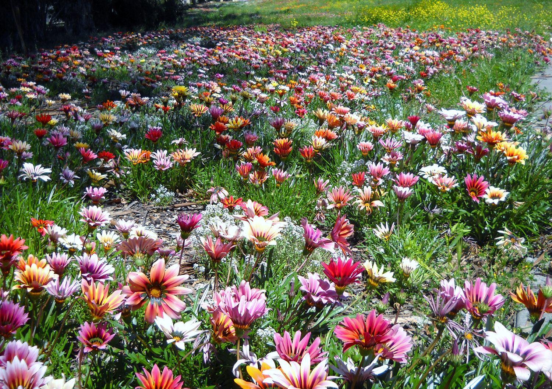 Fotos de flores silvestres fotografias y fotos para - Tipos de flores silvestres ...