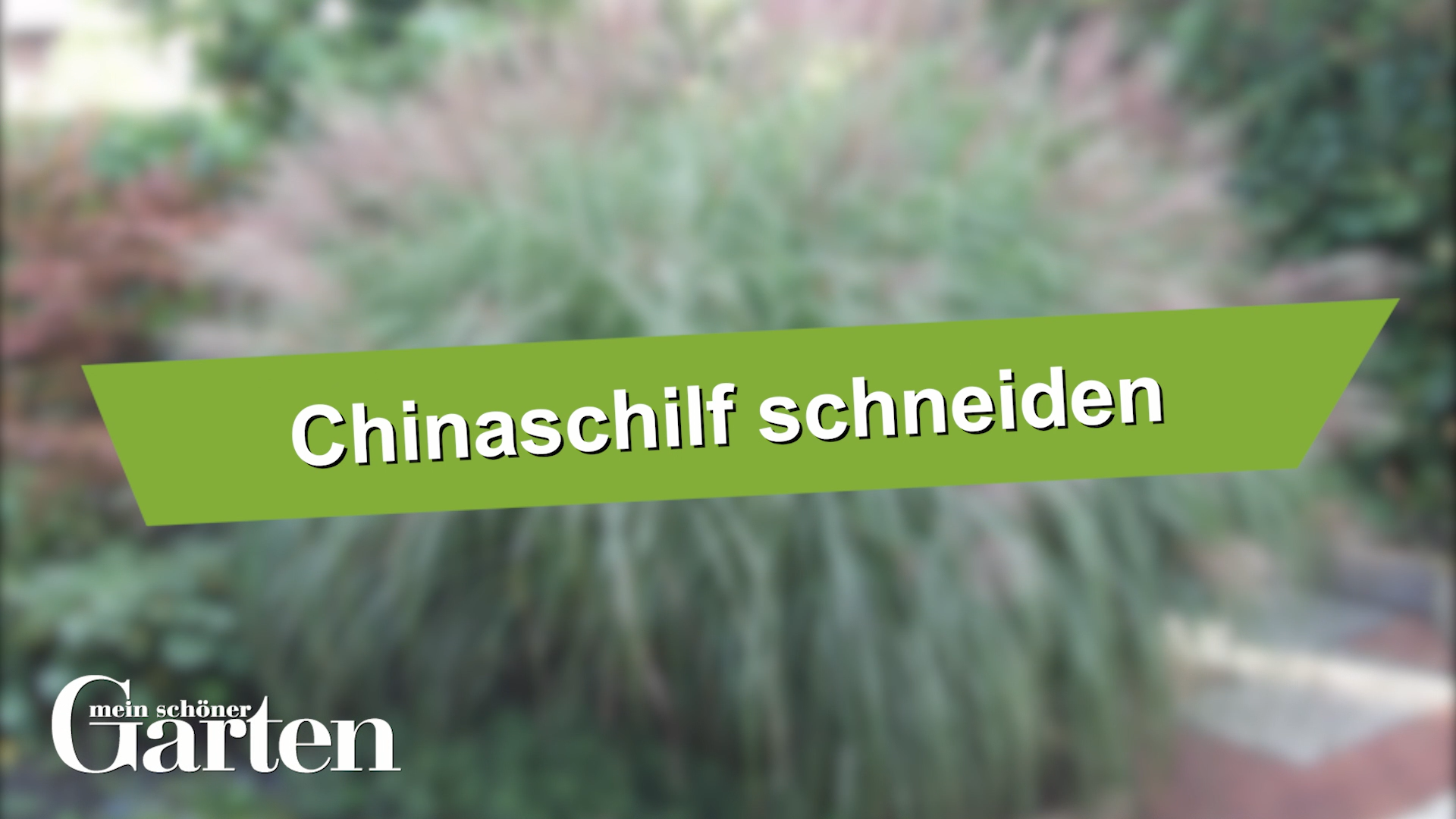 Chinaschilf Richtig Schneiden Chinaschilf Richtig Schneiden In 2020 Succulent Garden Indoor Ornamental Grasses Planting Succulents