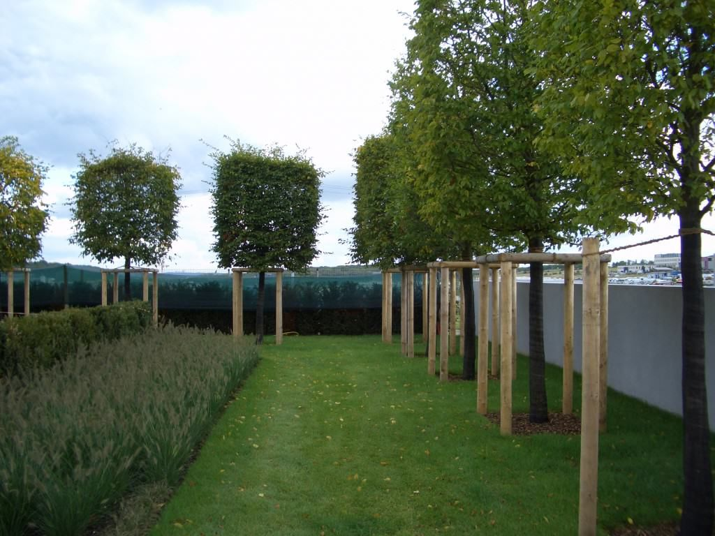 Spalierbaume Die Schwebende Hecke Moderner Sichtschutz Im Garten Garten Gartendesign Ideen Garten Gestalten