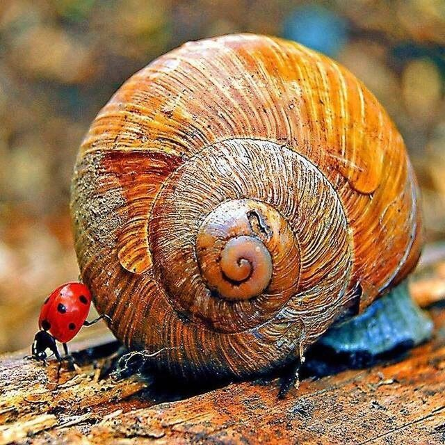 Pin by karen sell on Tiny ceatures   Snail, Animals ...