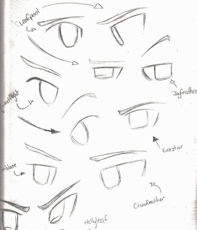 Drawn Warrior Cat Eye 1 827 X 965 Dumielauxepices Net With