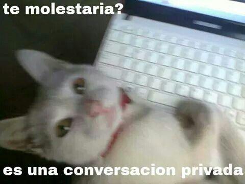 Imagen De Victoria Carrasco Monedero En Cats Cats Cats Gatos Conversaciones