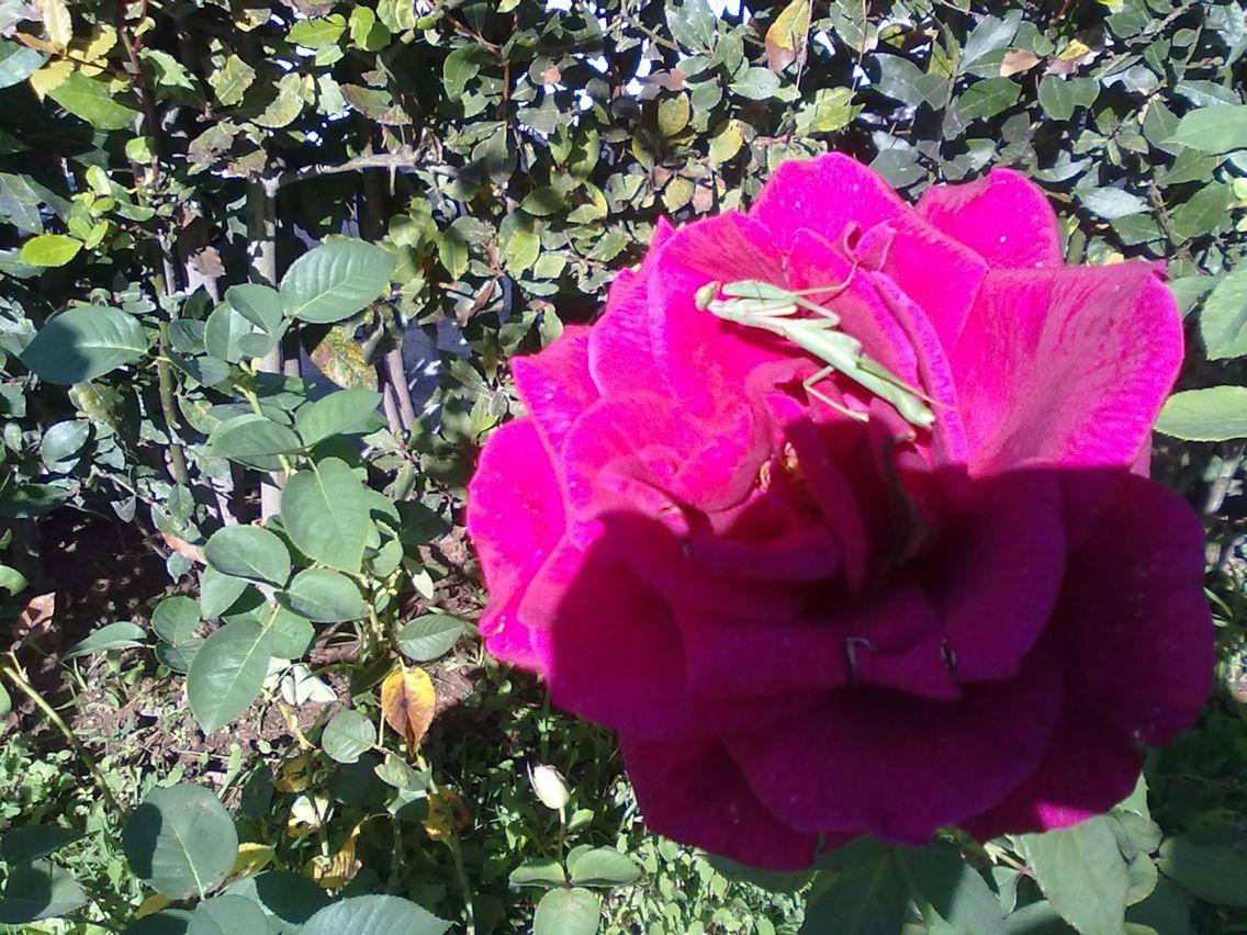 religious on flower