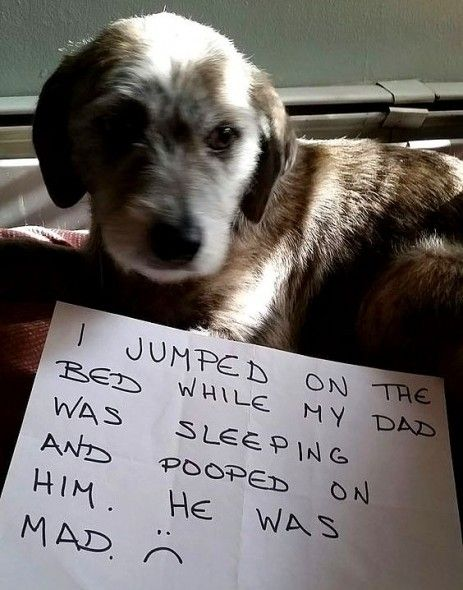 Dogs Who Ve Been Real Jerks To Their Dear Old Dads Dog Shaming Animal Shaming Dogs