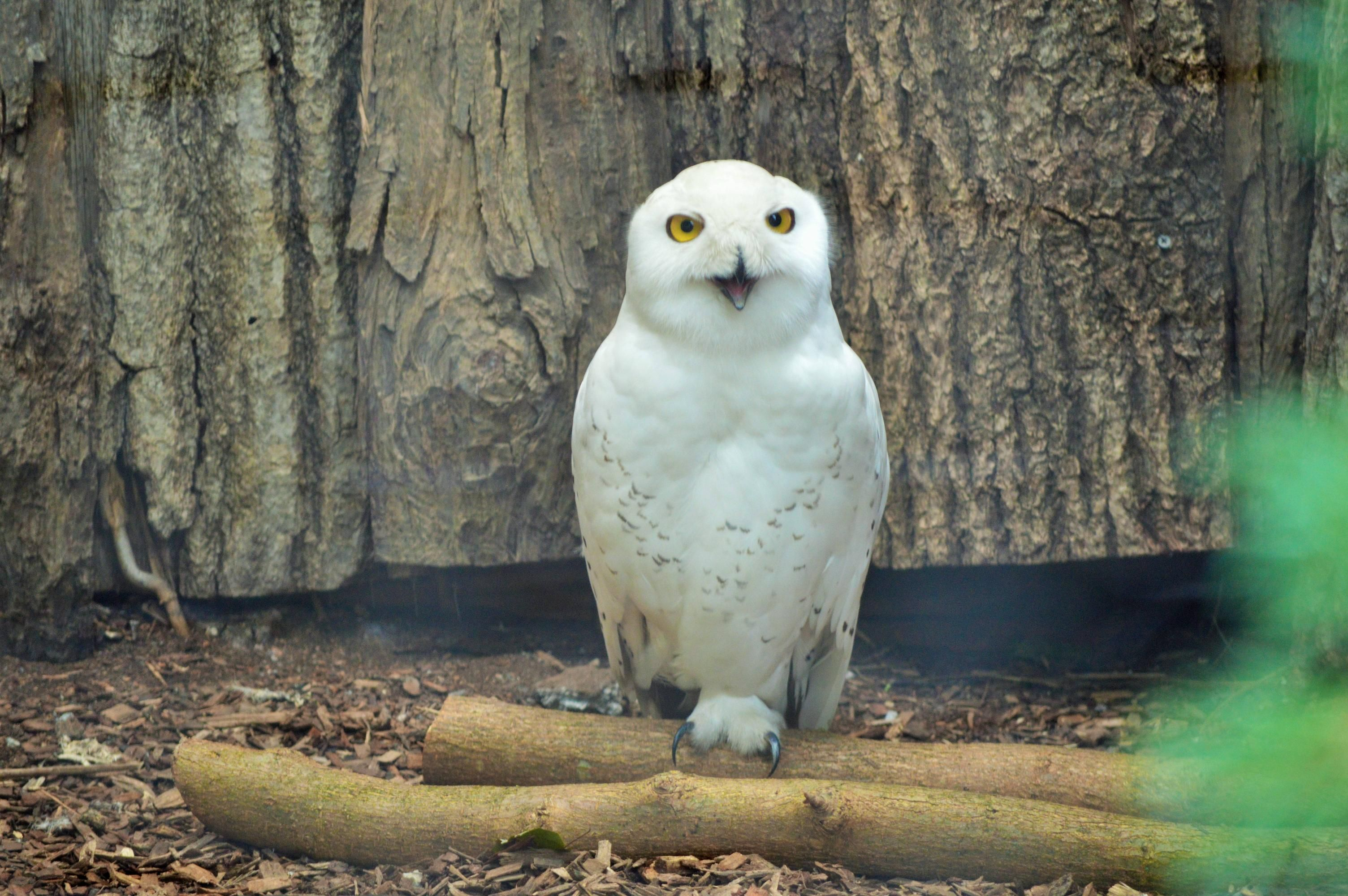 Took a photo of this beautiful snowy owl at the Nashville Zoo [6016 x 4000]