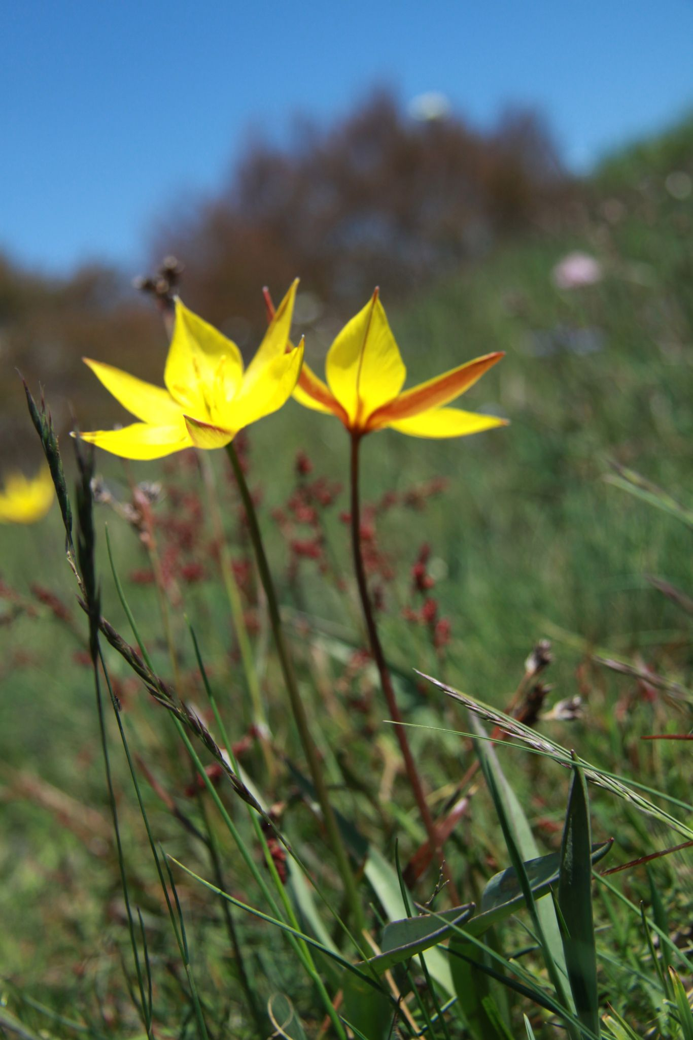 THE GRASS IS SINGING WILD FLOWER HUNTING IN THE