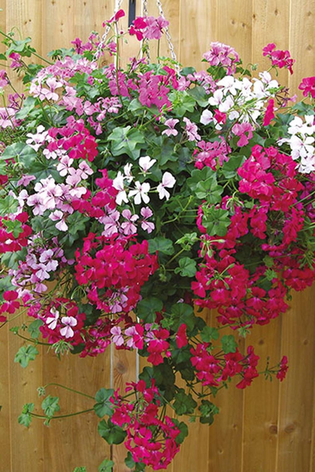 The best hanging baskets and flowers to put in them
