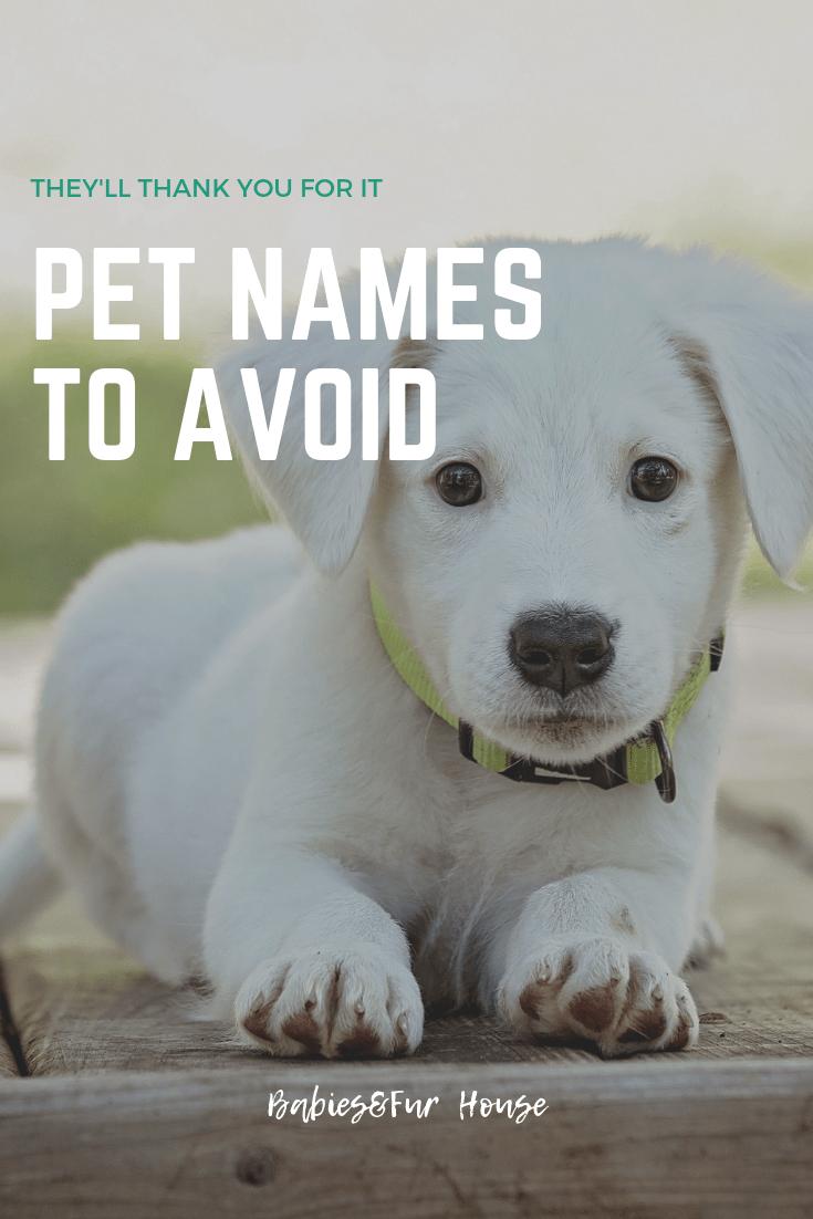 Pet Names To Avoid Babies Fur House Pet Names Kitten Care Puppy Training