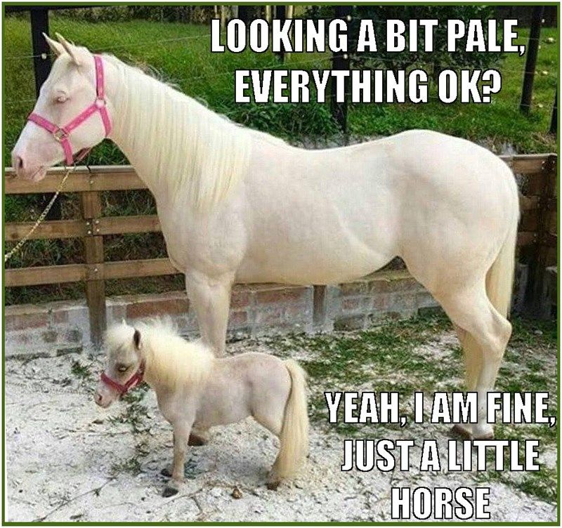 We Are All Created Equine Funny Horse Pictures Horse Quotes Funny Equestrian Problems Funny