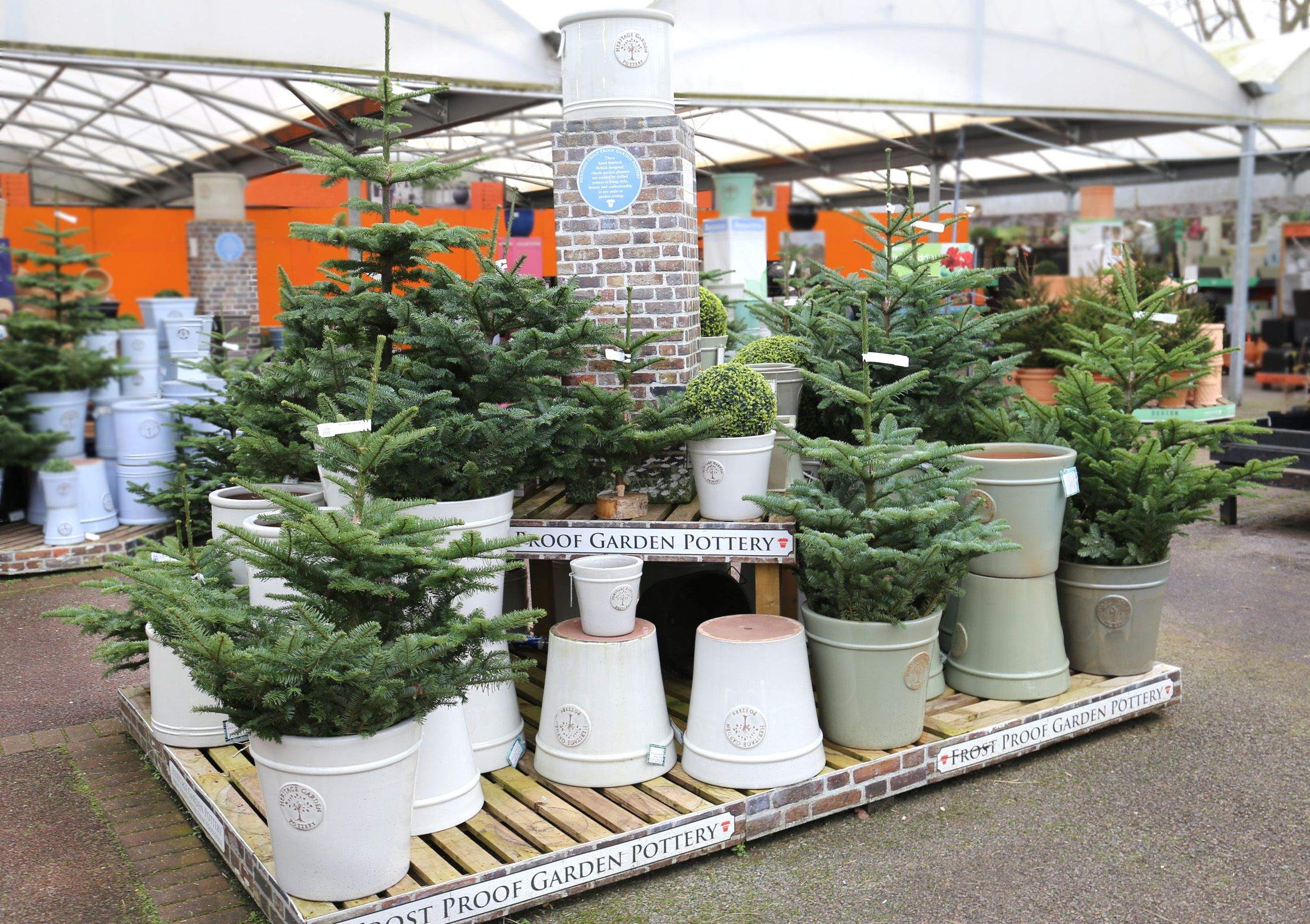 Real Christmas trees at Squire's Garden Centres Garden