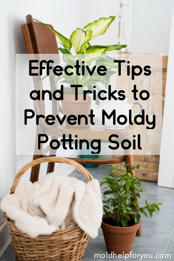Do You Have White Mold On Potting Soil Learn How To Get Rid Of Mold In Plant Soil As Well As Effective Tips House Plant Care House Plants Indoor Mold Remover