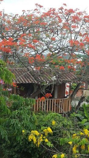 Casita en árbol de Acasia , El Triunfo Ecuador Casa del