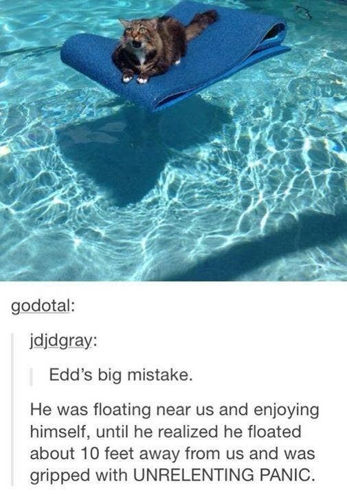 Photo of There's No Way You Won't Laugh At One Of These 100 Tumblr Posts